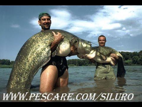Le meilleur de la pêche (compilation)