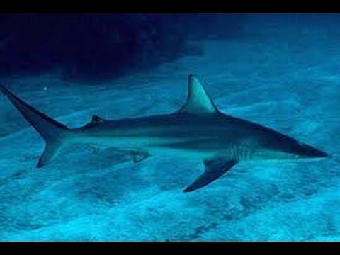 سمك القرش في شواطئ تمسمان