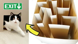 GIANT CAT MAZE!! Where's the exit??