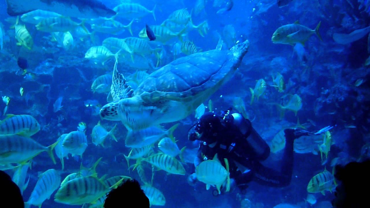 Aquaria KLCC-Shark Feeding - YouTube