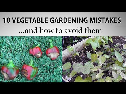 10 Vegetable Gardening Mistakes and How to avoid them - in 4K