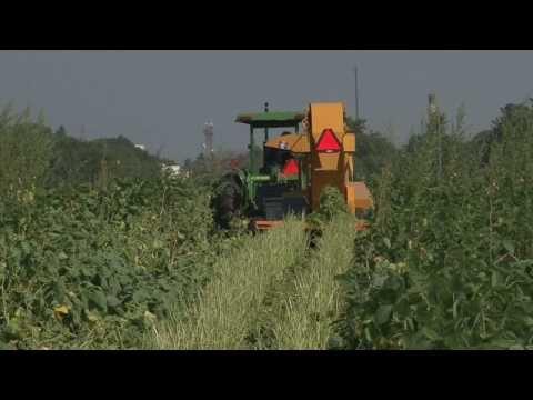 Edamame: A Future of the U.S. Soybean