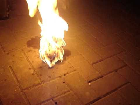 Cat Burning To Death Video