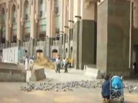 Kabootars (Pigeons) flying scene at Holy Makkah compound and Star Hotels=Part-1