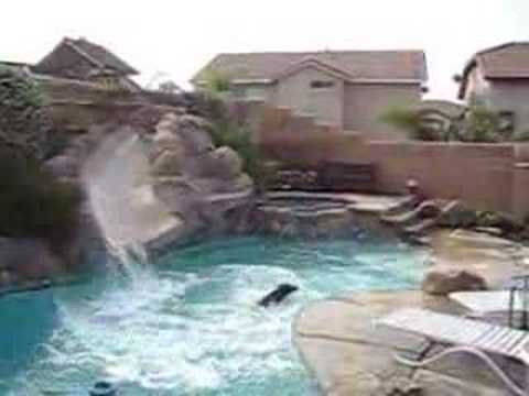 Crazy Dog Jumping in a Pool