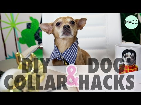 DIY Dog Collar & Hacks