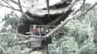HTGL Part 4 Of 7: Laos (Gibbon Experience, Luang Prabang