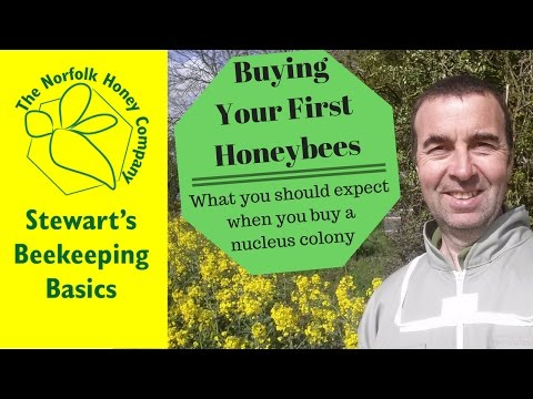 Buying a Nucleus Colony of Honeybees Beekeeping Basics - The Norfolk Honey Co.