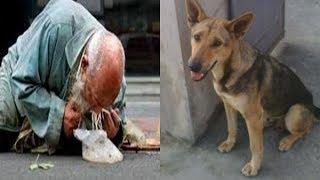 Ông lão ăn mày mang con chó về chăm sóc, 5 năm sau  con chó thả trước mặt ông thứ này