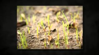 [Lawn Care Meridian Idaho] Video