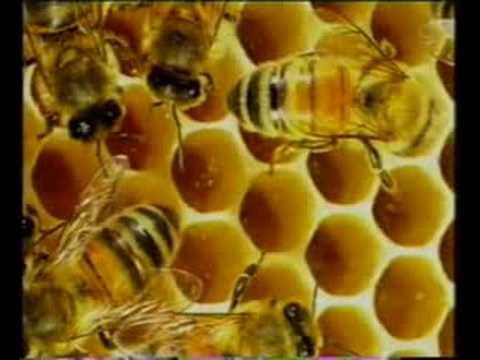 kehebatan Allah;saintifik lebah