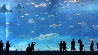 Kuroshio Sea 2nd Largest Aquarium Tank In The World