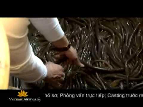Gỏi Cá Nhệch - Đặc Sản Kim Sơn Ninh Bình
