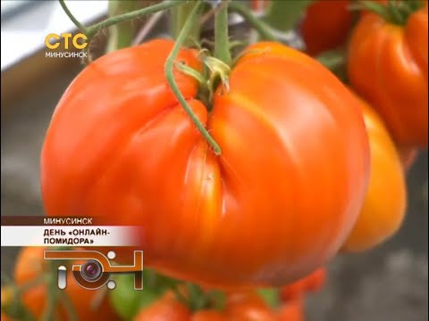 День «онлайн-помидора»