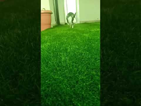Funny bunny running in slow motion 😂