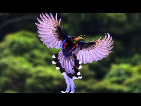 Beautiful Birds 1,