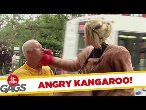 Angry Fighting Kangaroo, Part 2