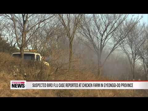 Suspected bird flu case reported at chicken farm in Gyeonggi-do   Province