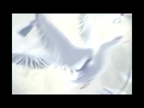 hqdefault jpgWhite Dove Flying Animation