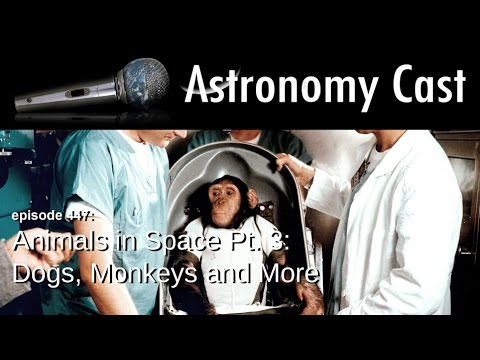 Astronomy Cast Ep. 447: Animals in Space Pt. 3: Dogs, Monkeys and More