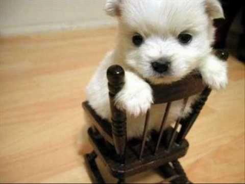 Nombres para perros: Originales, bonitos y graciosos online