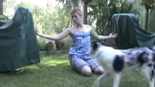 Dog Trick Training Tutorial: How To Train Your Dog To Jump