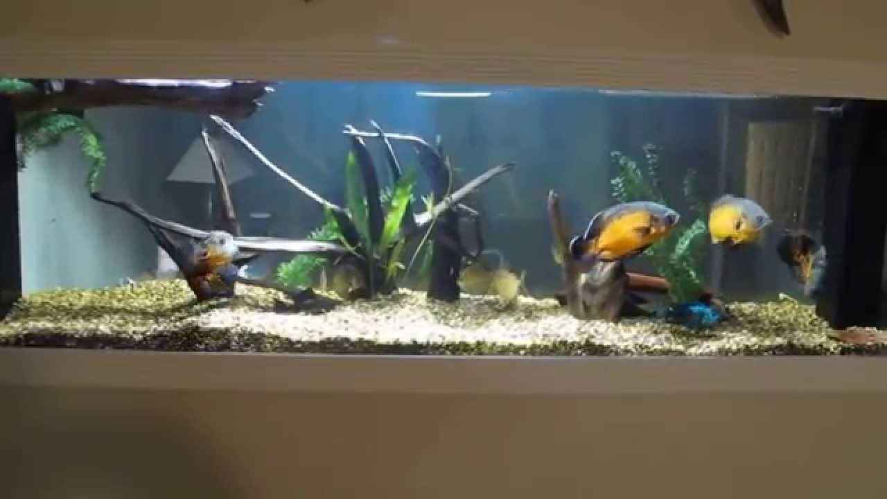 Monster 250 Gallon Aquarium Built Into Basement Wall With