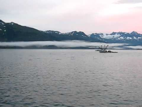 "Year Of 2010 Prince William Sound Alaska Salmon Fishing. ""I Have Never Seen Anything Like This"""