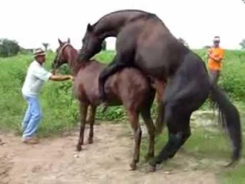 Cross Breeding - Mating Horses