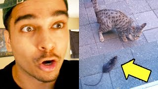 My Cat Brought THE Rat To My Door... AND IT WAS ALIVE! (MUST WATCH)
