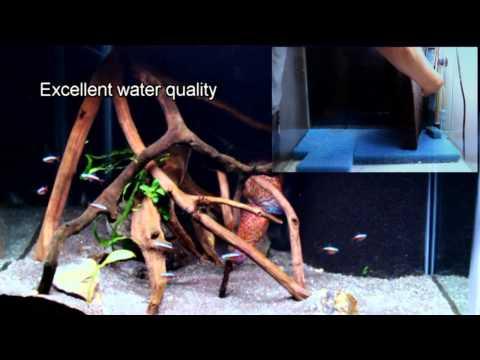 Creating a discus aquarium that is easy to maintain