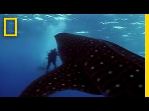 Lo squalo balena