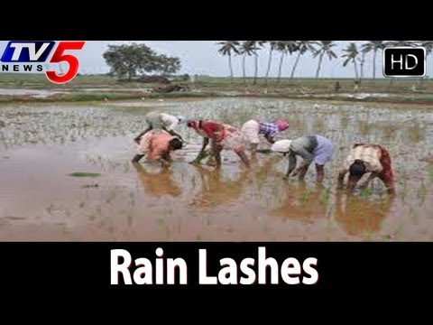 Heavy Rains Lashes Crops In kurnool - TV5