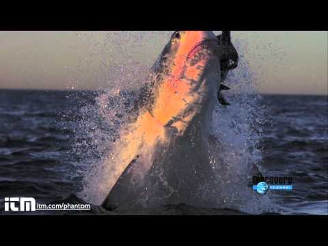 Slow Motion Shark Attack