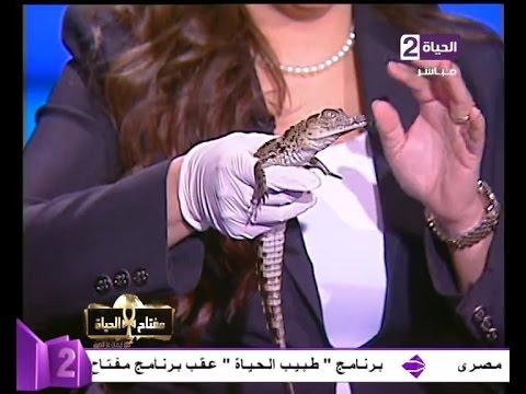 """اعلامية مصرية تستضيف """" تمساح """"حقيقي على الهواء"""