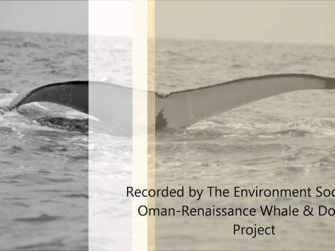 Arabian Humpback whale song in Dhofar region