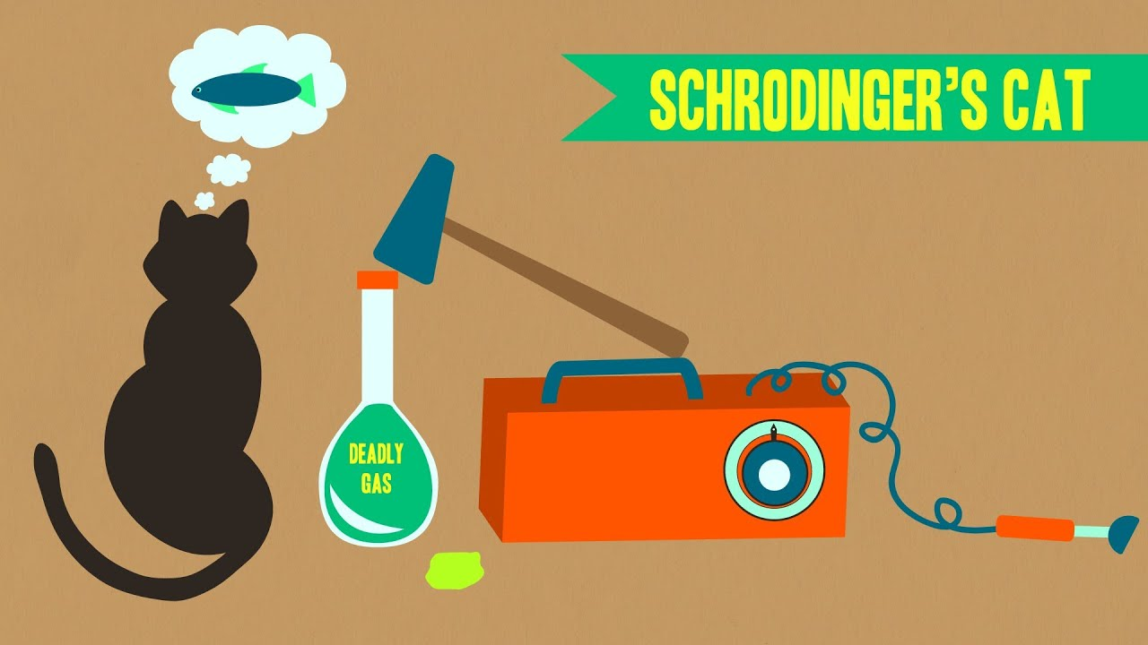 In Search Of Schrodinger S Cat