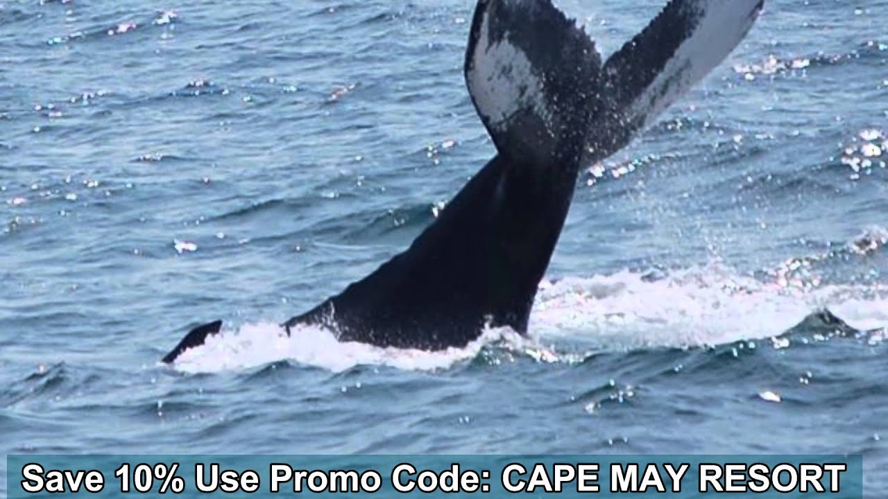 photograph relating to Mystic Aquarium Printable Coupons titled More youthful whales coupon code - Outrageous 8 printable coupon codes