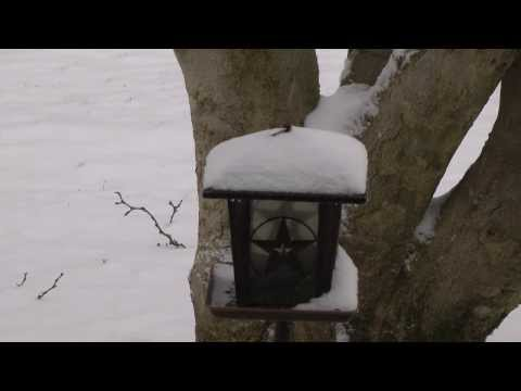 Time lapse video of winter storm Cleon - Columbus, Ohio snow accumulating on bird feeder
