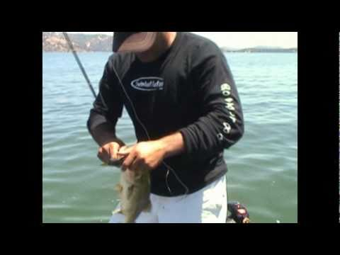 Bass Fishing Black Dog Baits Shellcracker Clear Lake swimbait