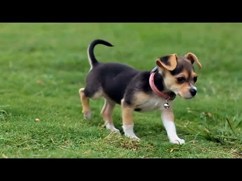 Little Polly Playing in the Park | The Daily Puppy
