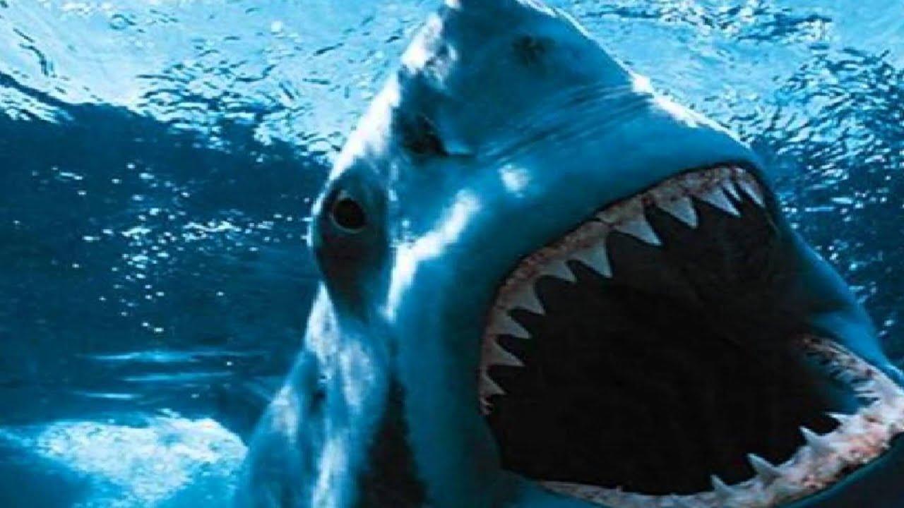 megalodon shark vs t rex