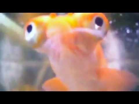 The google eyed fish youtube for One eyed fish