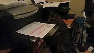Cat vs Printing Paper