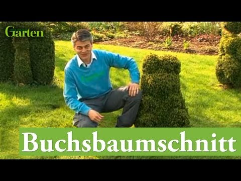 buchsbaum schnitt youtube. Black Bedroom Furniture Sets. Home Design Ideas
