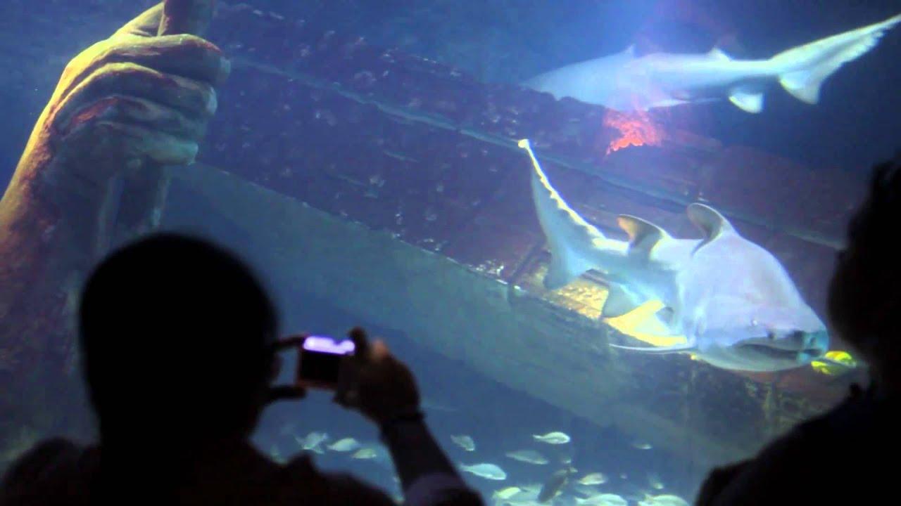 Atlantis Marine World Aquarium Riverhead New York Youtube