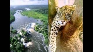 Fauna Y Flora De Brasil
