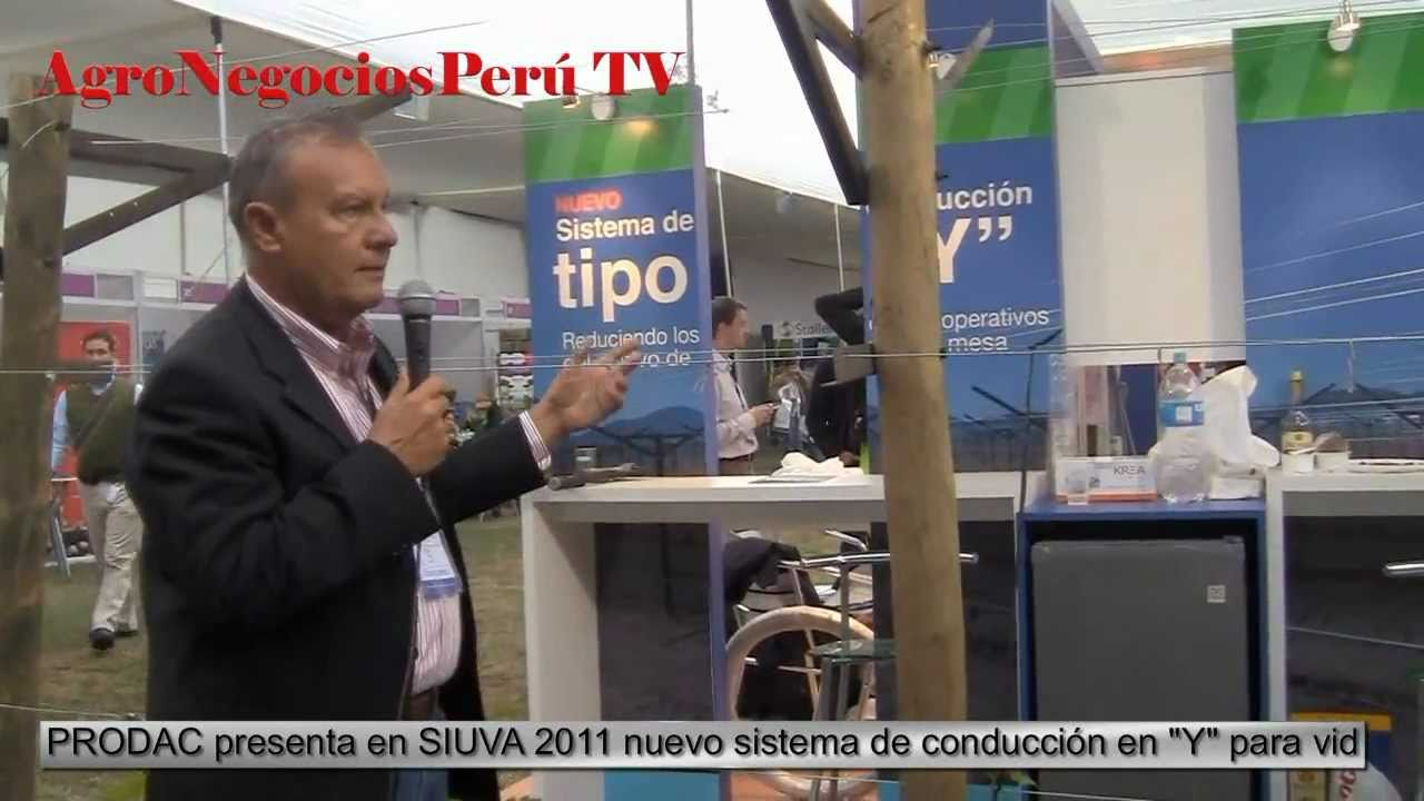 Sistema de conduccion en y para uva youtube for Ing mesa y lopez