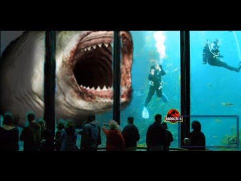 go back gt gallery for gt black demon shark