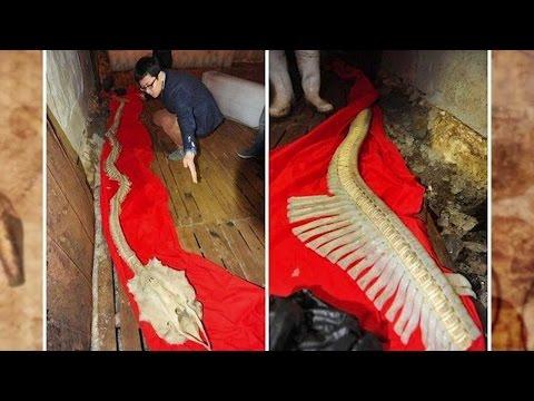 [KH Huyền Bí] Phát hiện bộ xương rồng thật sự tại Trung Quốc!